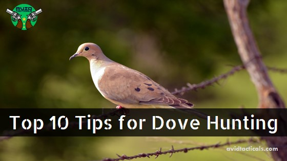 top 10 tips for dove hunting
